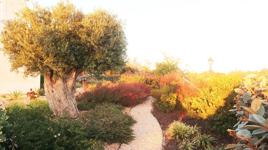 Service dry garden planting
