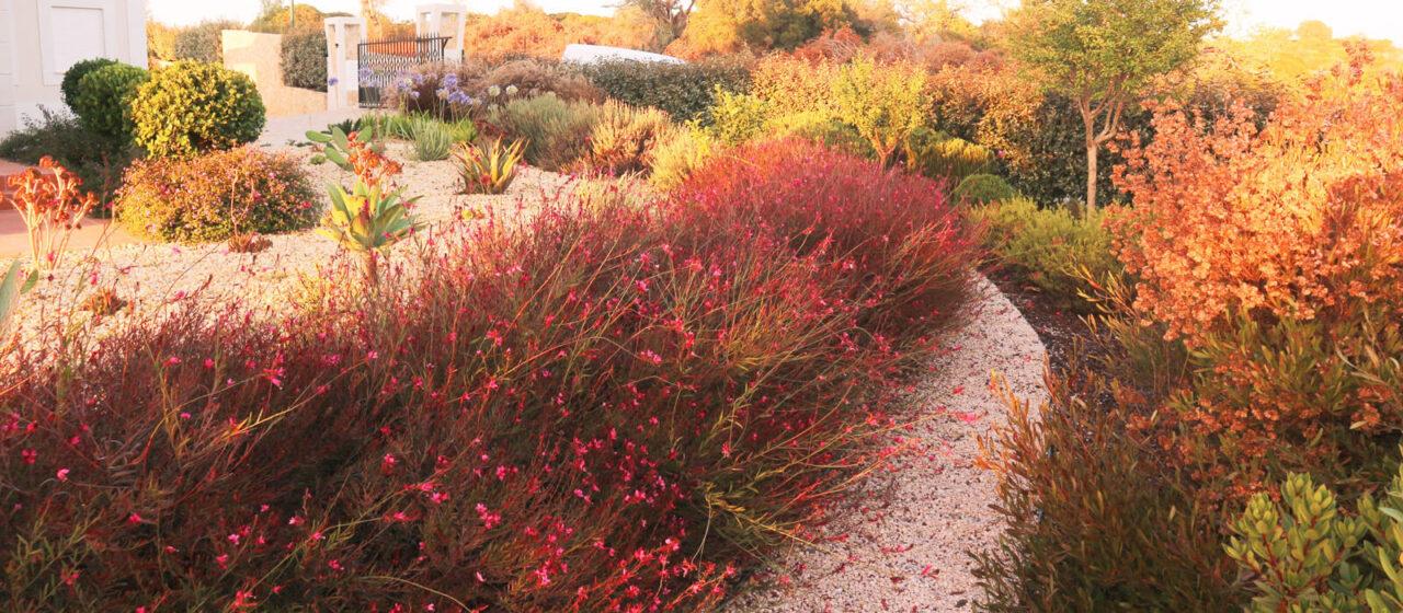 https://www.vitalgardens.com/wp-content/uploads/2020/03/Service-dry-garden-plants-1-1280x560.jpg