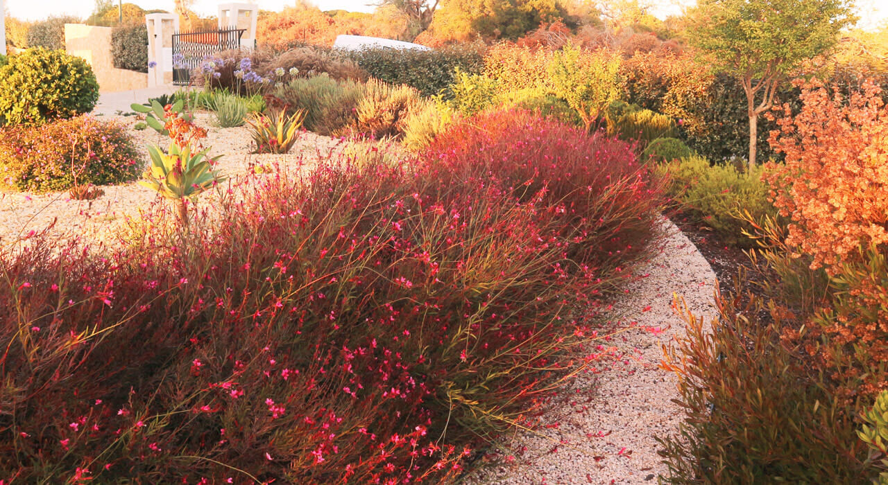 https://www.vitalgardens.com/wp-content/uploads/2020/03/Service-dry-garden-plants-1-1280x700.jpg
