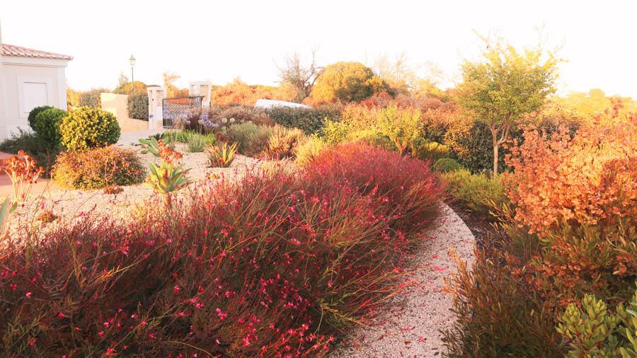 Service dry garden plants