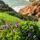 Gardening near the ocean